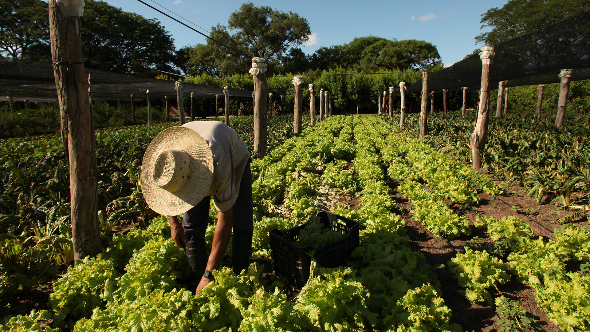 Las Buenas Prácticas Agrícolas serán obligatorias desde 2020
